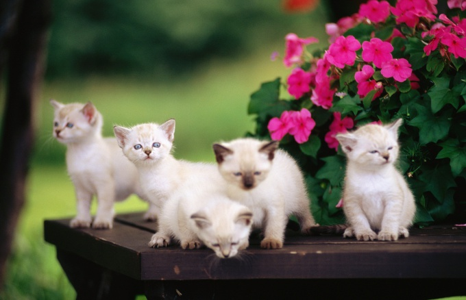 кормление котят без кошки