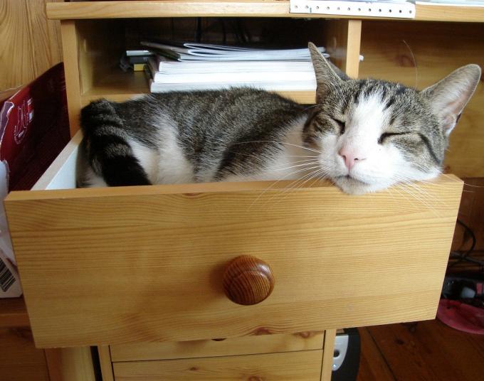 Как построить кошке домик