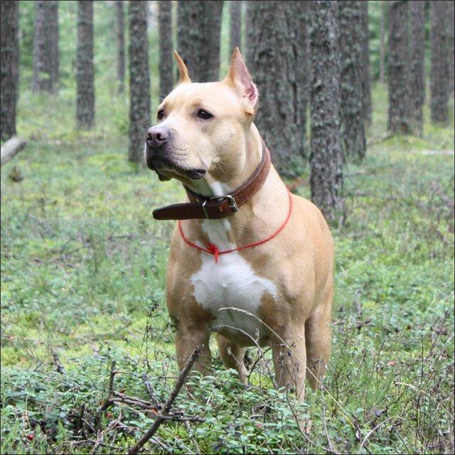 научить собаку искать