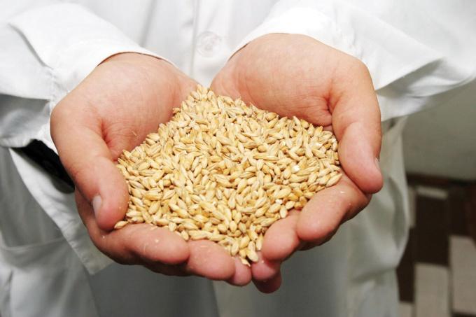 Как купить зерно