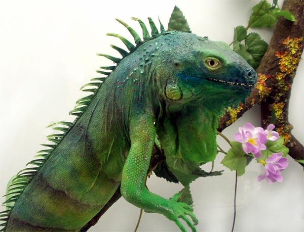 Как вырастить и воспитать дракона