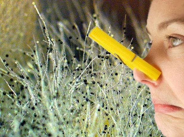 Как убрать запах плесени