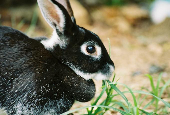 Имя кролику можно подобрать, подмечая его отличительные особенности