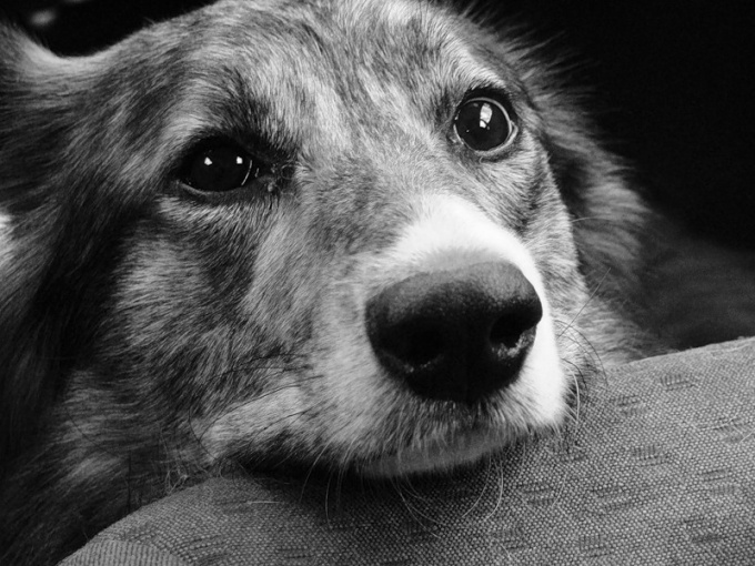 При повышенеии температуры собака испытывает те же страдания, что и человек