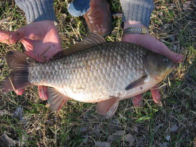 Как ловить рыбу осенью