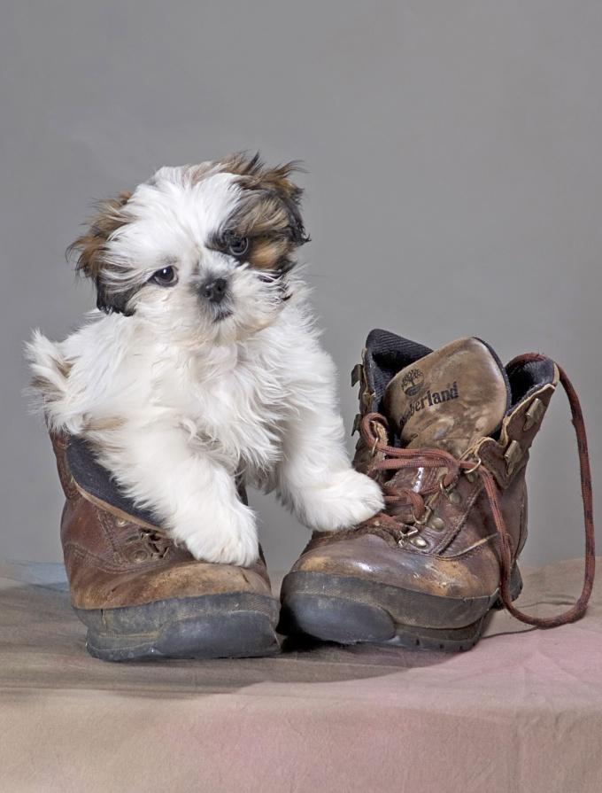 Как выходить щенка