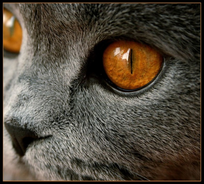 Как нарисовать кошачьи <strong>глаза</strong>