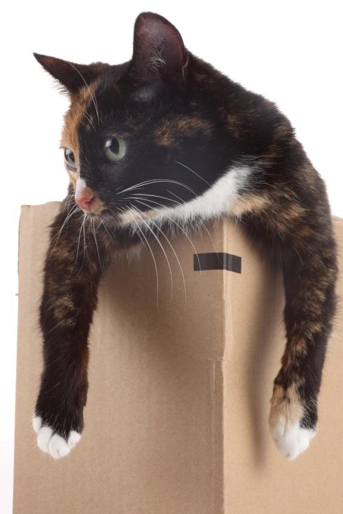 Переехать можно и без стрессов