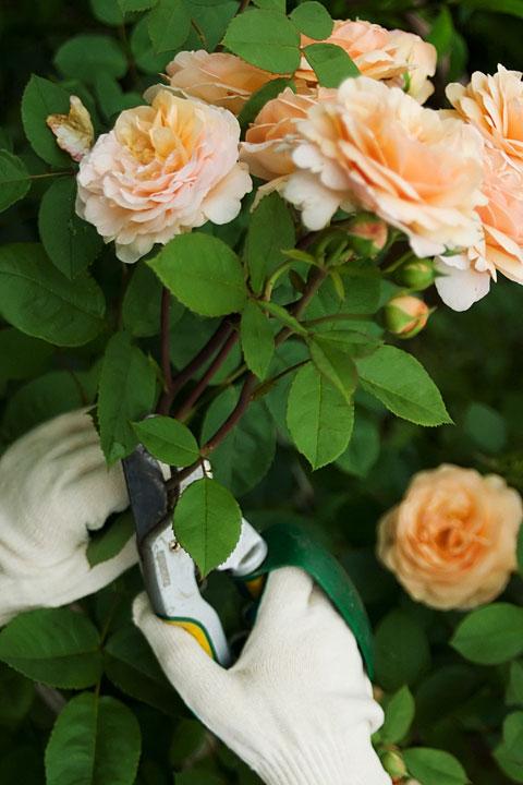 Как обрезать цветы