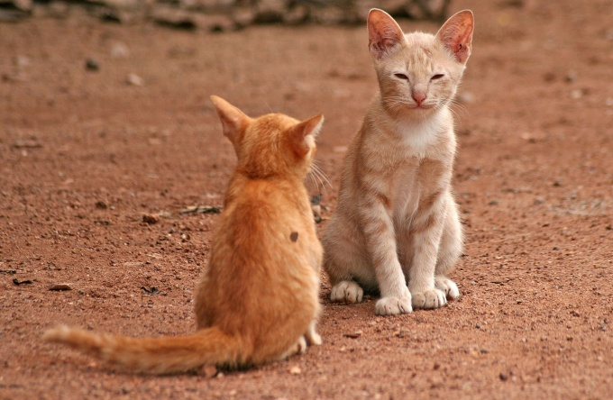 To make friends with a cat and a cat perhaps, then, you will be able to observe their interaction, it's very interesting