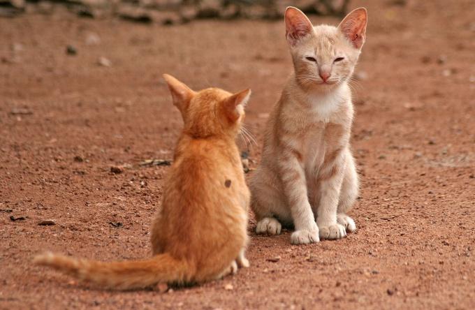 Подружить кота и кошку возможно, тогда вы сможете наблюдать за их взаимодействием, это очень интересно