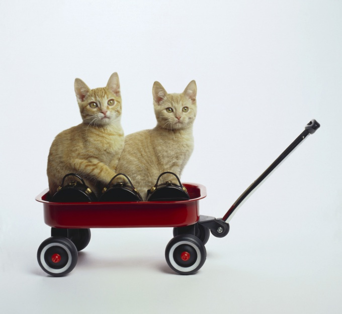 Transportation of cats - the thing to which you need to prepare