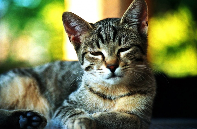 Dry nose, lethargy, decreased appetite, signs of a cold for a cat