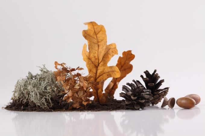 Растения - хорошие помощники в защите дома от зла