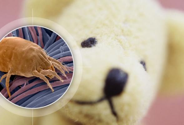Как избавиться от пылевого клеща