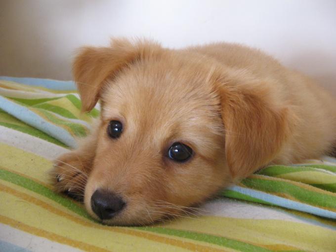 Как определить пол собаки
