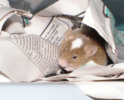 How to find <strong>hamster</strong> <b>apartment</b>
