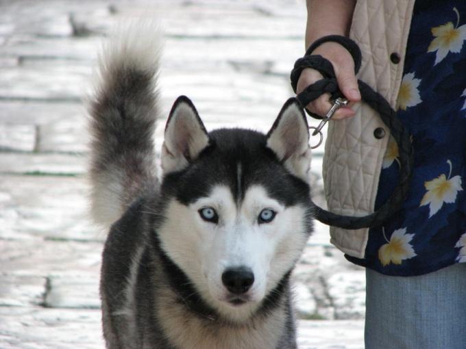 как обращаться с собакой