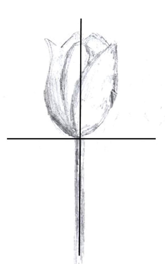 Рисуйте от осевых линий так же, как рисовали бы чашу