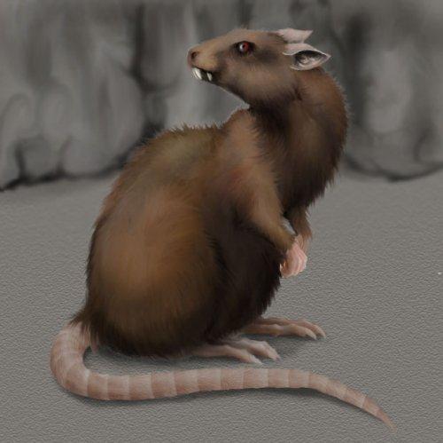 Как нарисовать крыс