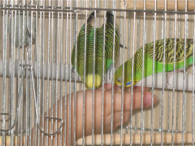 How to name <strong>parrot</strong> <b>boy</b> wave