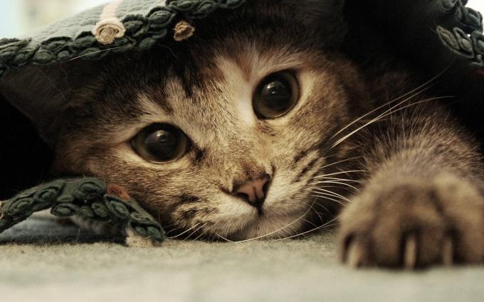 запах кошки как избавиться