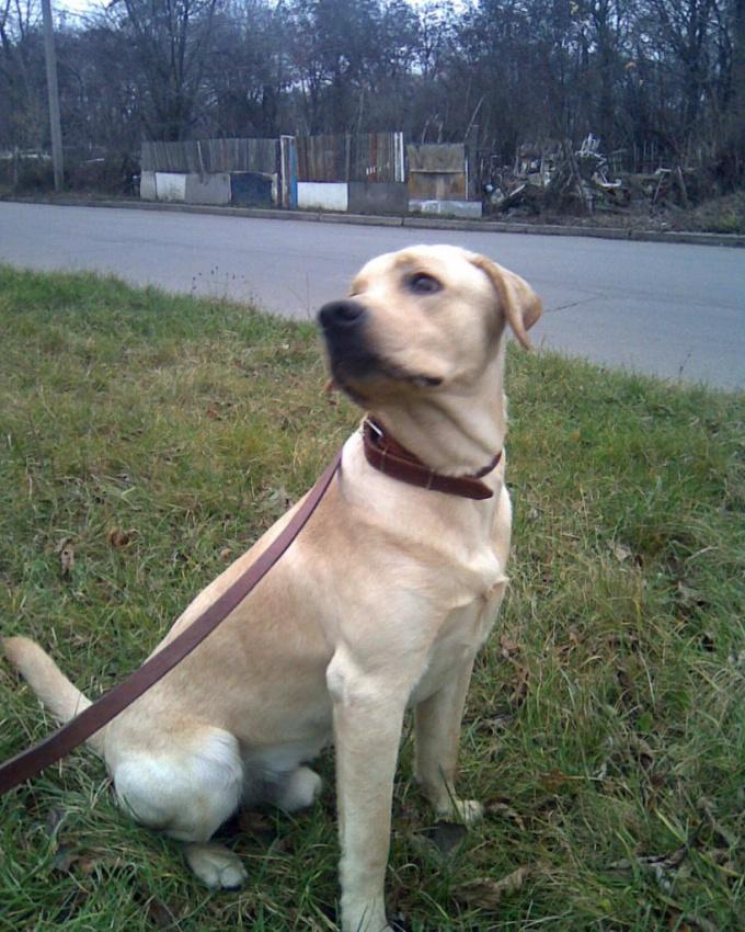 как отучить собаку выть