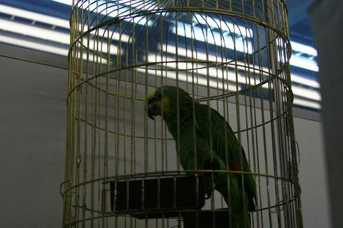 Как перевезти попугая