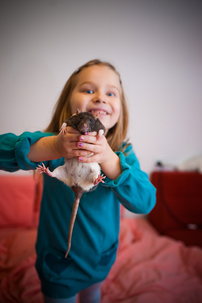 как играть с крысами