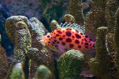 как установить внешний аквариумный фильтр