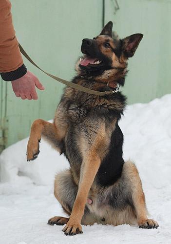 Как обучить <b>собаку</b> к <em>команде</em>