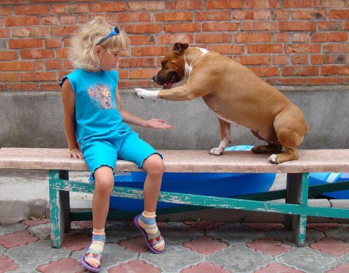 """Как научить собаку к команде """"дай лапу"""""""