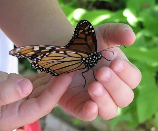 Как знакомить дошкольников с природой