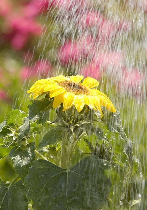 Как смягчить воду для полива цветов