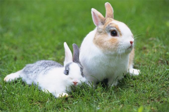 Как кормить карликового <strong>кролика</strong>