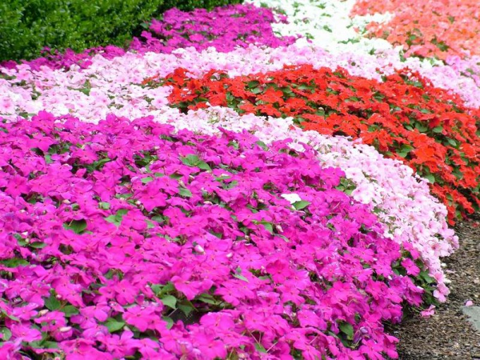 Как оформить клумбу для цветов