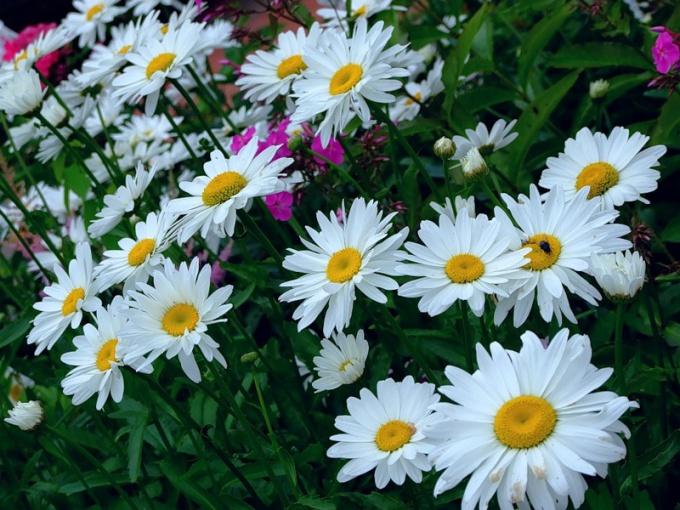Как продать садовый участок