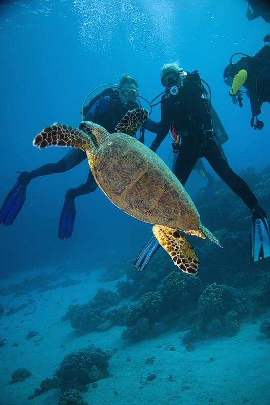 как можно купать черепах