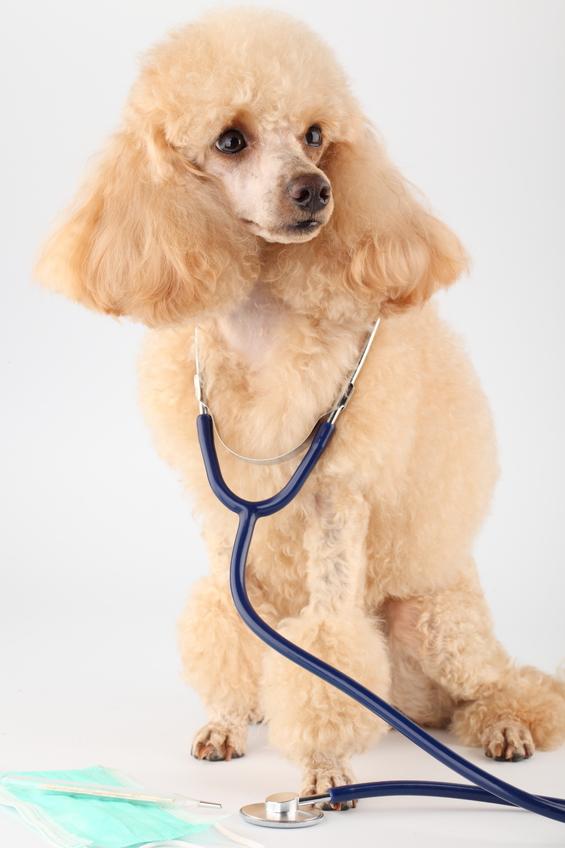 как остановить кровотечение у собаки