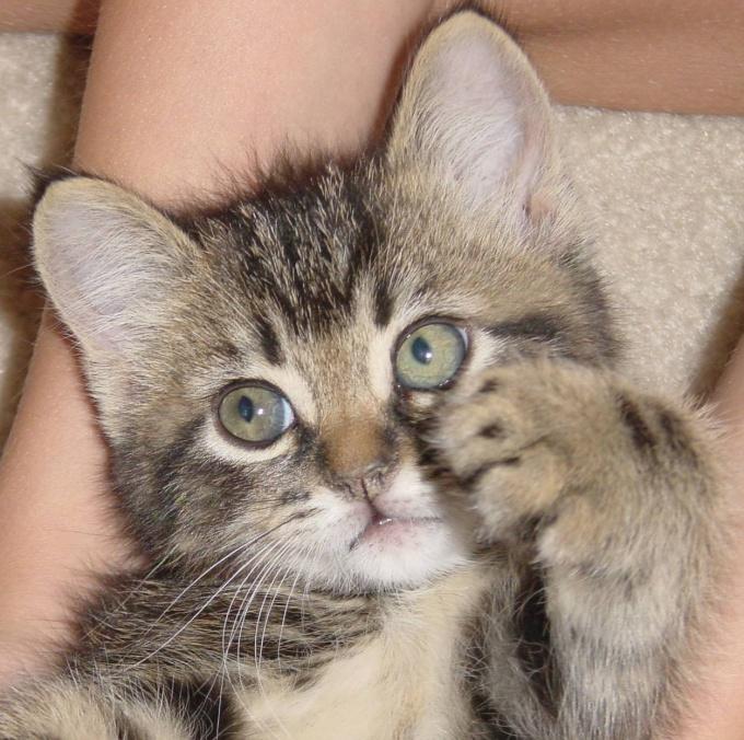 как отучить взрослую кошку бросаться на руки