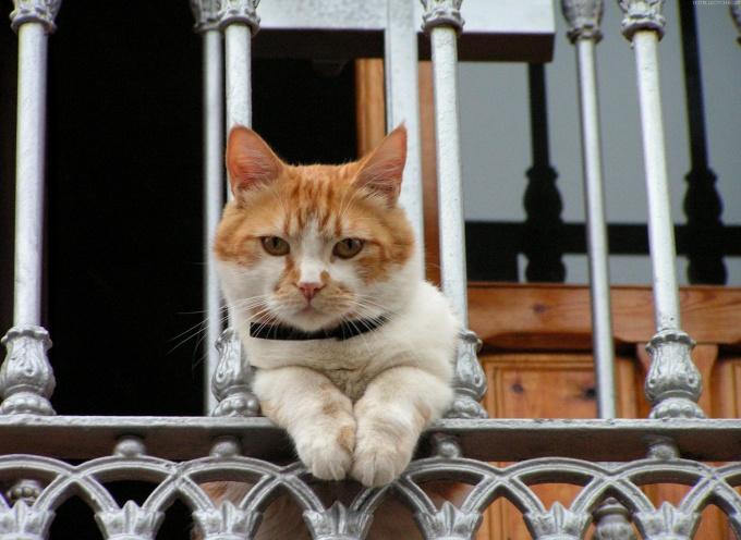 инструкция ошейника для кошки
