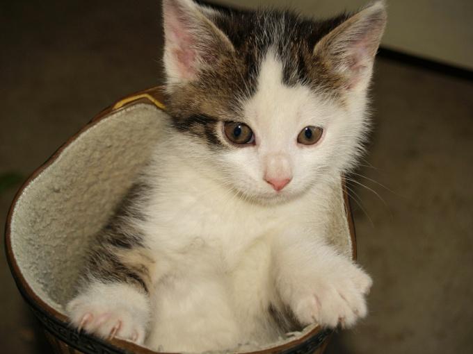 как научить котенка ходитьв туалет