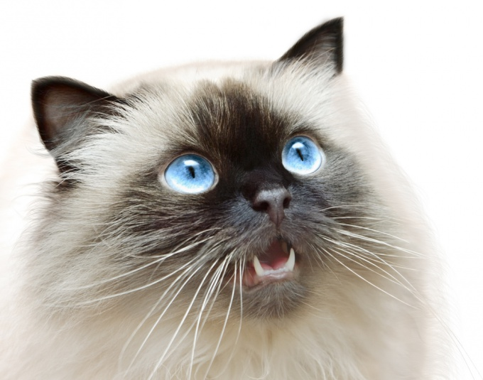 высчитать возраст кота по человеческим меркам