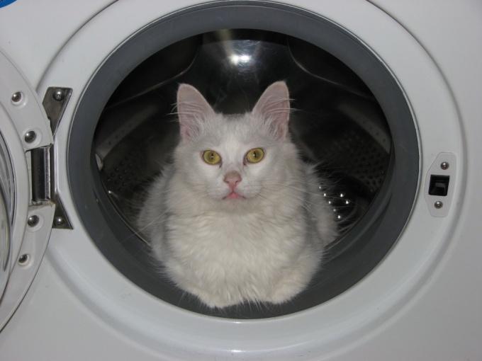 как избавиться от линьки кошки