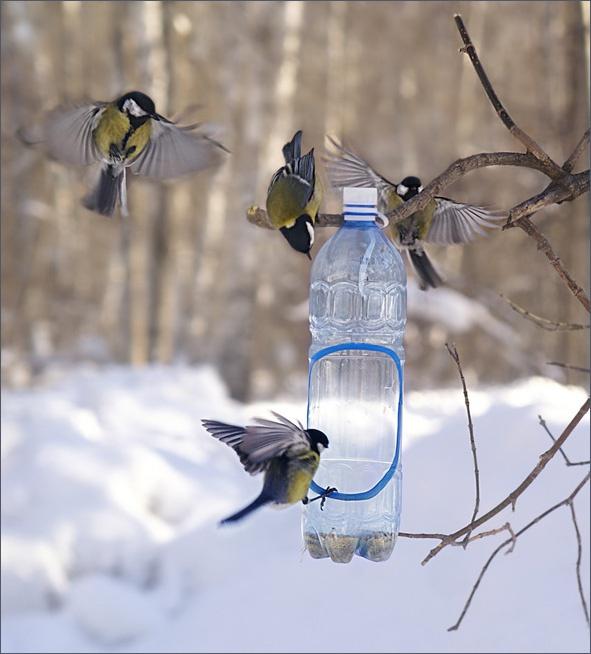 Как сделать простую кормушку для птиц фото 12