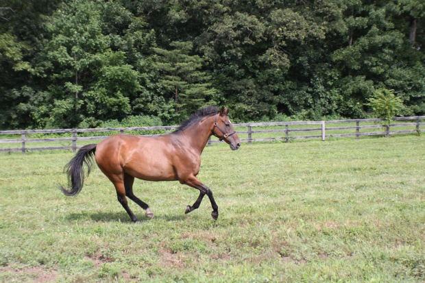 Как остановить лошадь