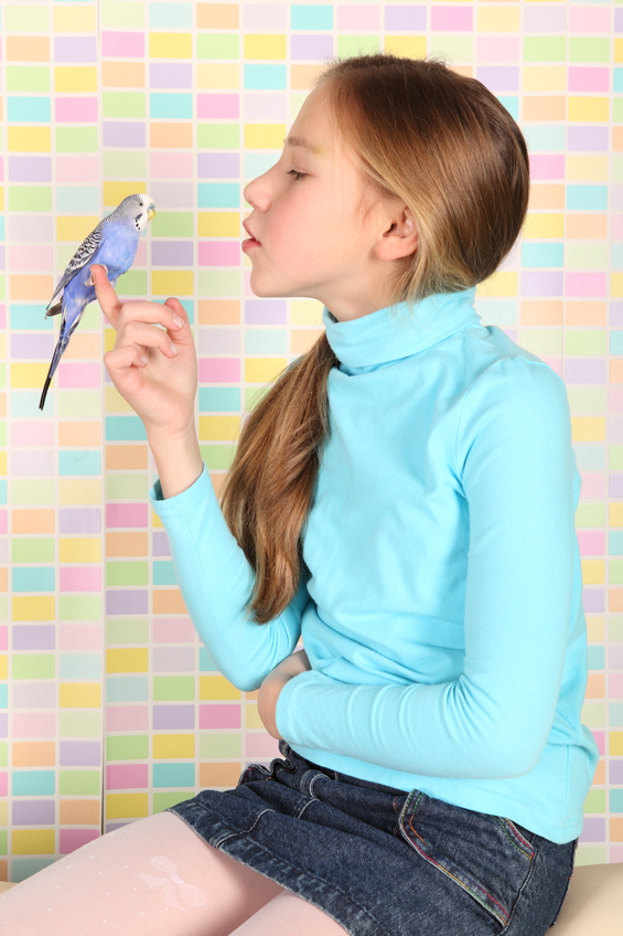 как узнать пол маленького папугайчика