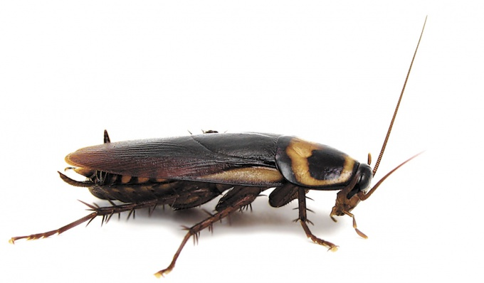 How to get rid of insects in the house
