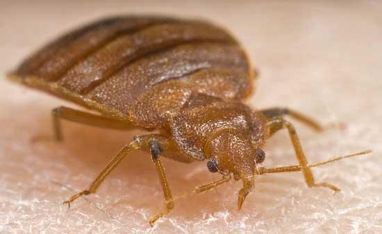 Как избавиться от домашних паразитов
