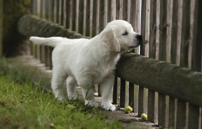как найти пропавших собак